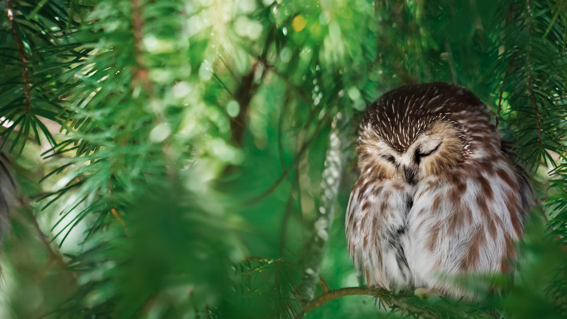 Eule mit geschlossenen Augen sitzt auf einem Baum