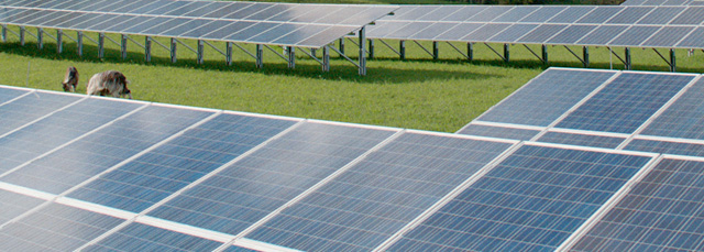 viele Reihen Solarzellen